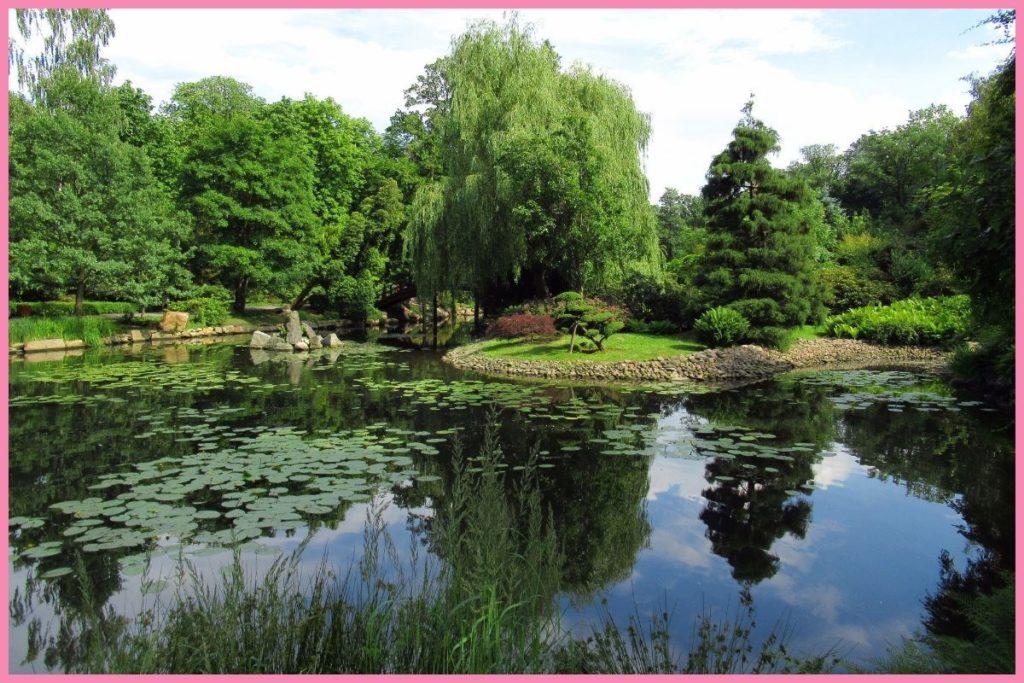 ogród japoński Wrocław latem